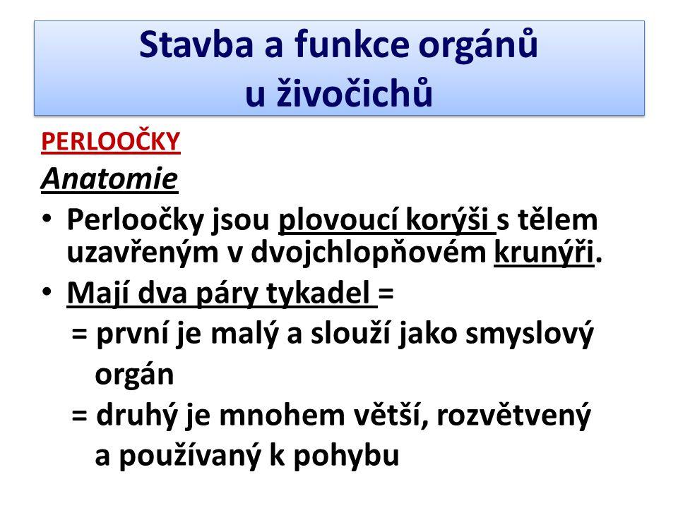 Stavba a funkce orgánů u živočichů PERLOOČKY Anatomie • Perloočky jsou plovoucí korýši s tělem uzavřeným v dvojchlopňovém krunýři. • Mají dva páry tyk