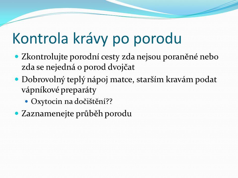 Kontrola krávy po porodu  Zkontrolujte porodní cesty zda nejsou poraněné nebo zda se nejedná o porod dvojčat  Dobrovolný teplý nápoj matce, starším