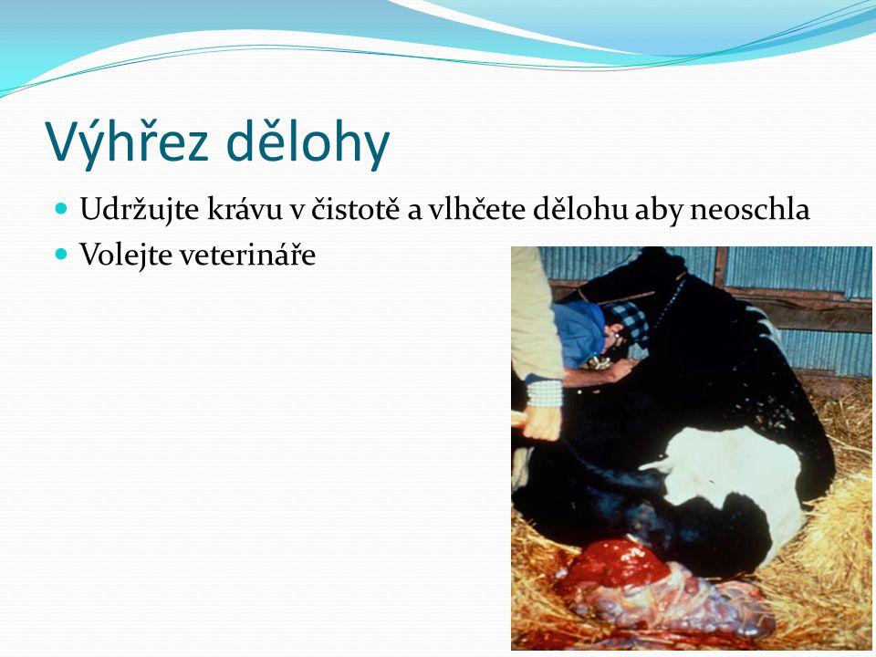 Výhřez dělohy  Udržujte krávu v čistotě a vlhčete dělohu aby neoschla  Volejte veterináře