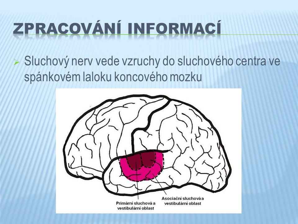  Sluchový nerv vede vzruchy do sluchového centra ve spánkovém laloku koncového mozku