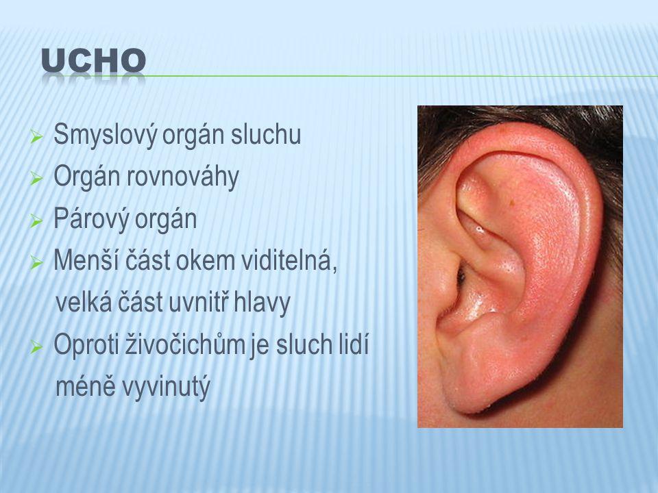 Smyslový orgán sluchu  Orgán rovnováhy  Párový orgán  Menší část okem viditelná, velká část uvnitř hlavy  Oproti živočichům je sluch lidí méně v