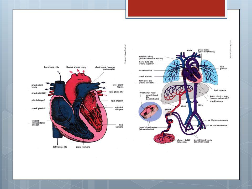 Ultrazvukové vyšetření srdce