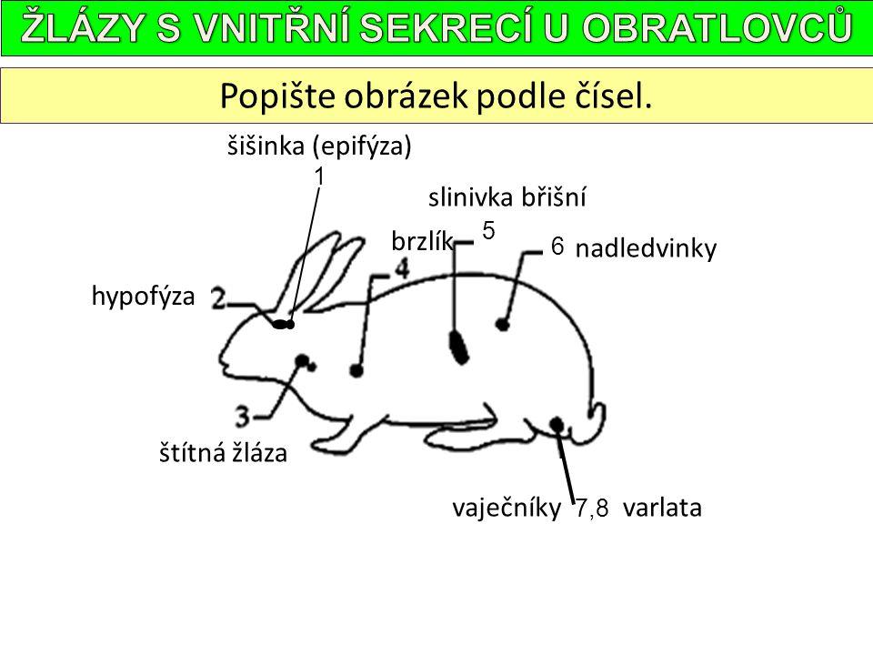 Popište obrázek podle čísel. šišinka (epifýza) hypofýza slinivka břišní vaječníkyvarlata 1 5 6 7,8 brzlík nadledvinky štítná žláza
