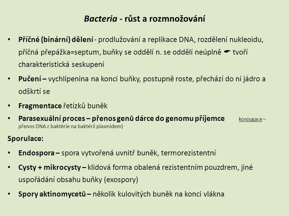 Bacteria - růst a rozmnožování • Příčné (binární) dělení - prodlužování a replikace DNA, rozdělení nukleoidu, příčná přepážka=septum, buňky se oddělí