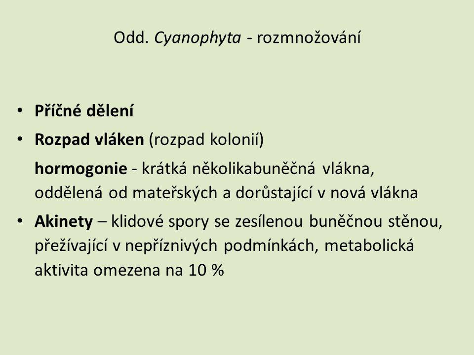 Odd. Cyanophyta - rozmnožování • Příčné dělení • Rozpad vláken (rozpad kolonií) hormogonie - krátká několikabuněčná vlákna, oddělená od mateřských a d