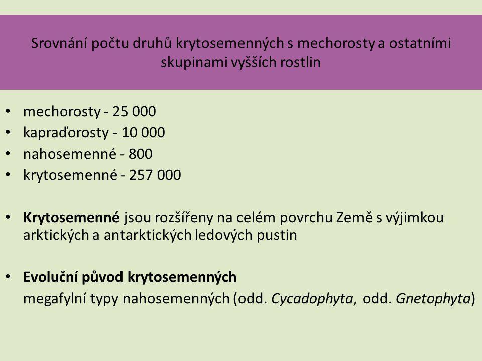 Srovnání počtu druhů krytosemenných s mechorosty a ostatními skupinami vyšších rostlin • mechorosty - 25 000 • kapraďorosty - 10 000 • nahosemenné - 8