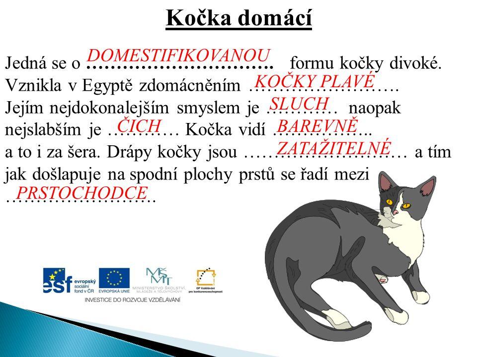 Kočka domácí Jedná se o …………………………. formu kočky divoké. Vznikla v Egyptě zdomácněním ……………………. Jejím nejdokonalejším smyslem je ………… naopak nejslabším