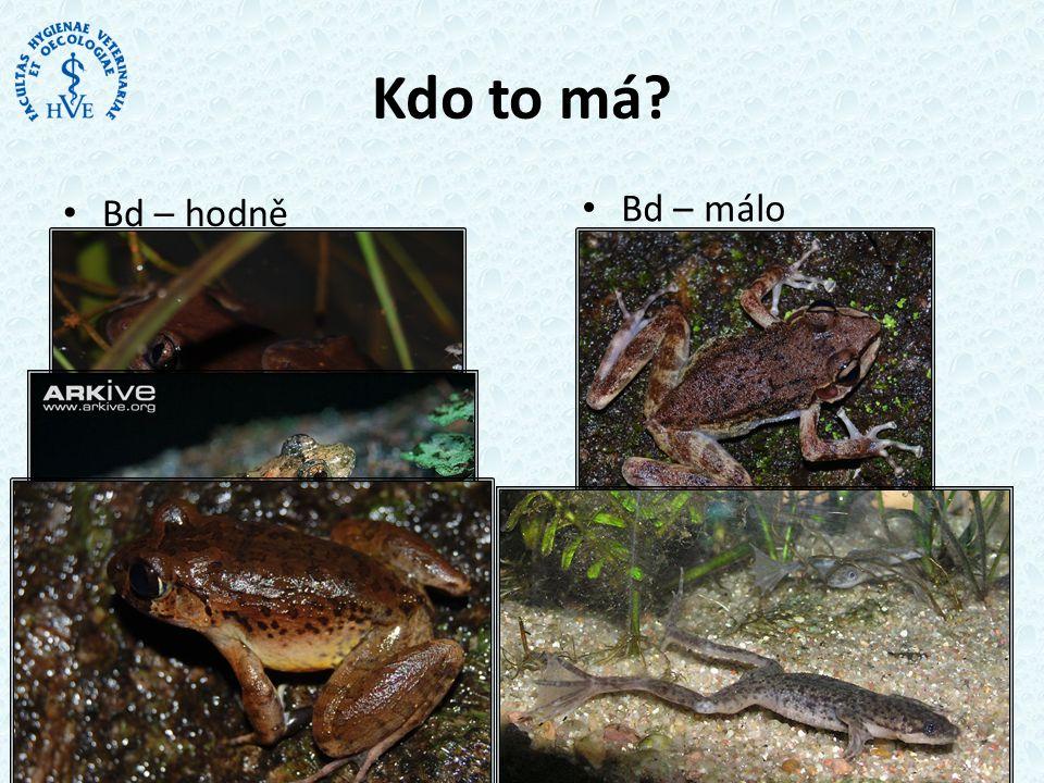 • Bd – hodně • Hyperoliidae • Phrynobatrachidae • Arthroleptidae Kdo to má.