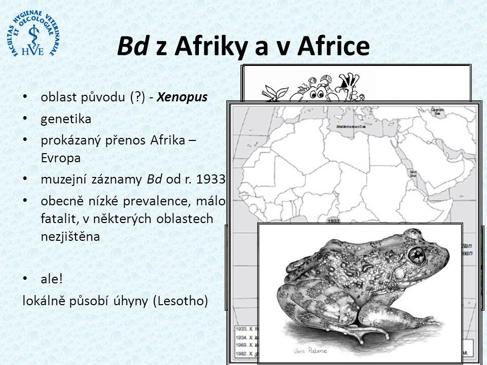 Bd z Afriky a v Africe • oblast původu (?) - Xenopus • genetika • prokázaný přenos Afrika – Evropa • muzejní záznamy Bd od r.