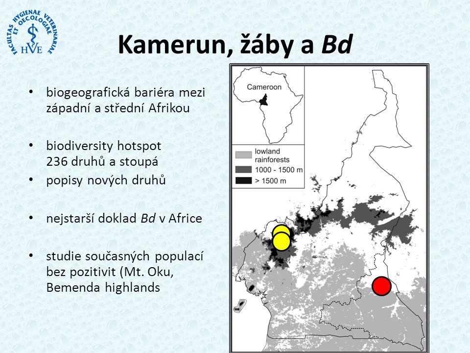 Hlednání Bd v Kamerunu • vzorky sběr r.