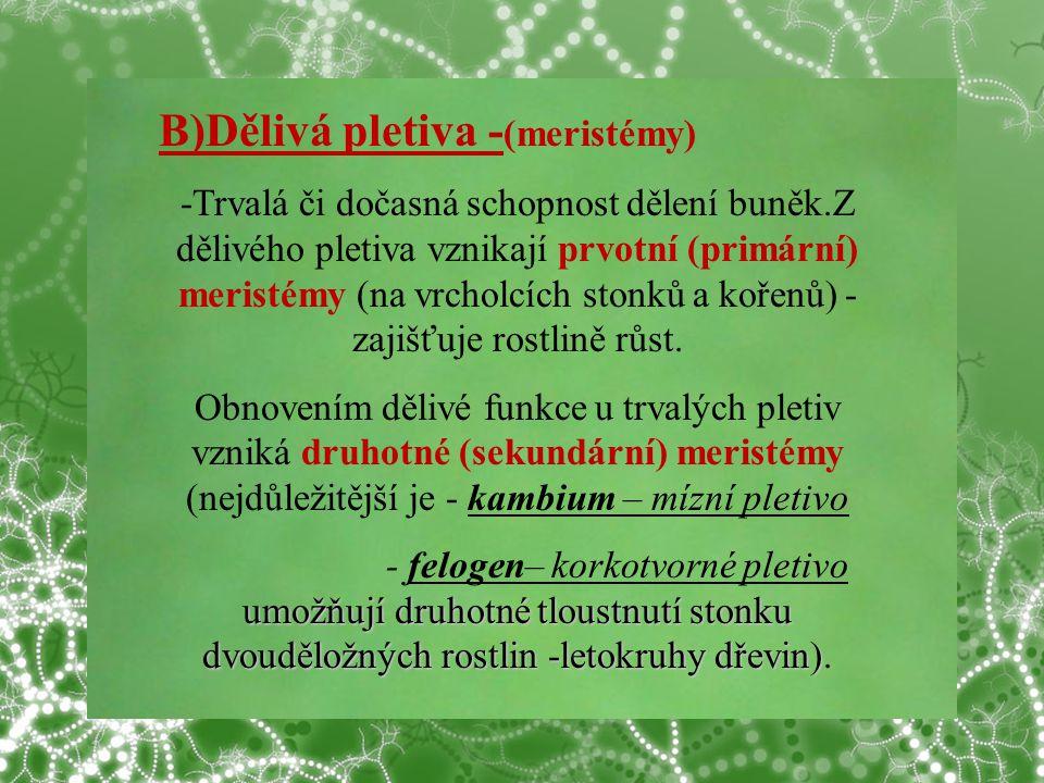 © Letohradské soukromé gymnázium o.p.s. B)Dělivá pletiva - (meristémy) -Trvalá či dočasná schopnost dělení buněk.Z dělivého pletiva vznikají prvotní (