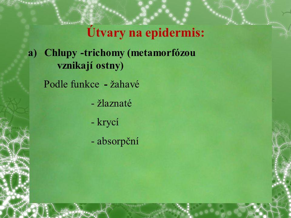 Útvary na epidermis: a)Chlupy -trichomy (metamorfózou vznikají ostny) Podle funkce - žahavé - žlaznaté - krycí - absorpční