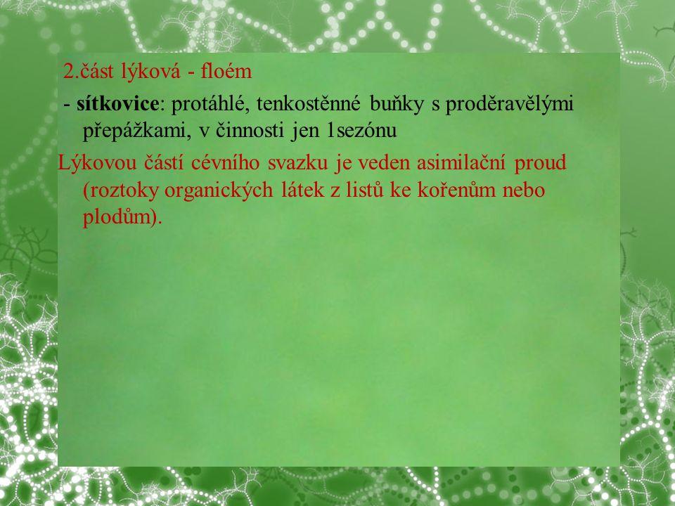 © Letohradské soukromé gymnázium o.p.s. 2.část lýková - floém - sítkovice: protáhlé, tenkostěnné buňky s proděravělými přepážkami, v činnosti jen 1sez