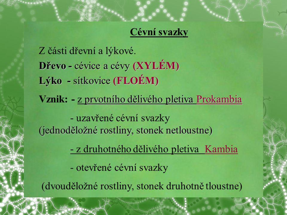 © Letohradské soukromé gymnázium o.p.s. Cévní svazky Z části dřevní a lýkové. Dřevo - cévice a cévy (XYLÉM) Lýko - sítkovice (FLOÉM) prvotního dělivéh