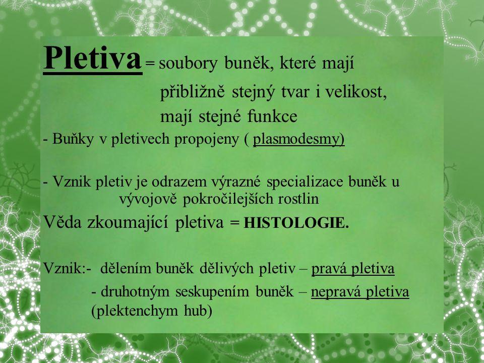 © Letohradské soukromé gymnázium o.p.s. Pletiva = soubory buněk, které mají přibližně stejný tvar i velikost, mají stejné funkce - Buňky v pletivech p