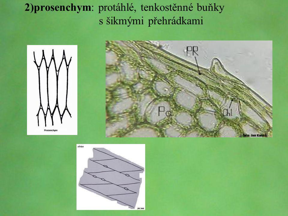 © Letohradské soukromé gymnázium o.p.s. 2)prosenchym: protáhlé, tenkostěnné buňky s šikmými přehrádkami