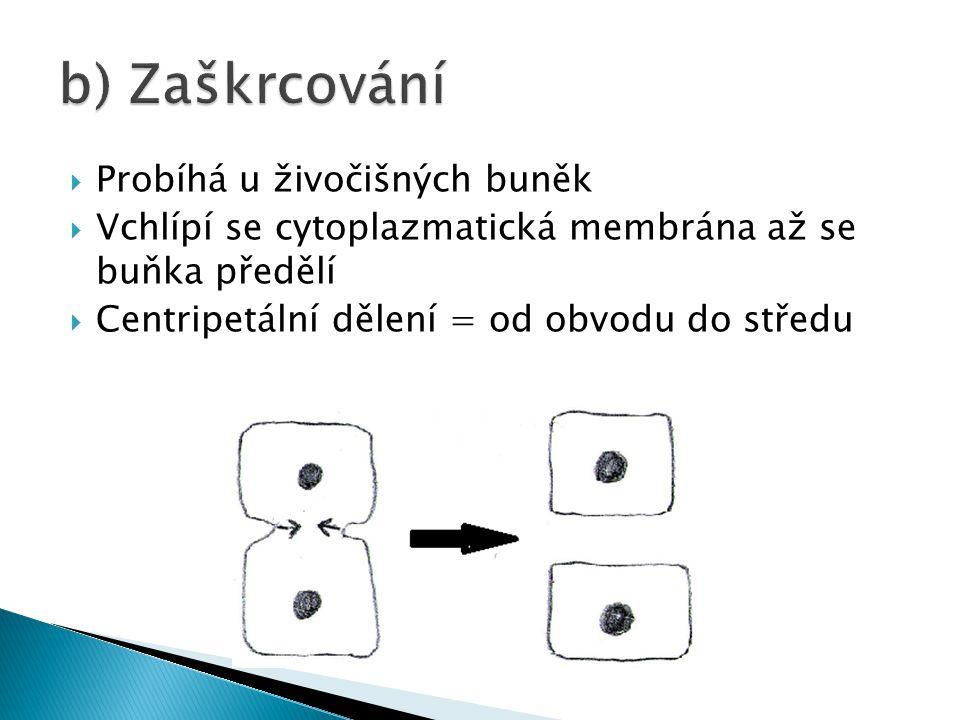  Probíhá u živočišných buněk  Vchlípí se cytoplazmatická membrána až se buňka předělí  Centripetální dělení = od obvodu do středu