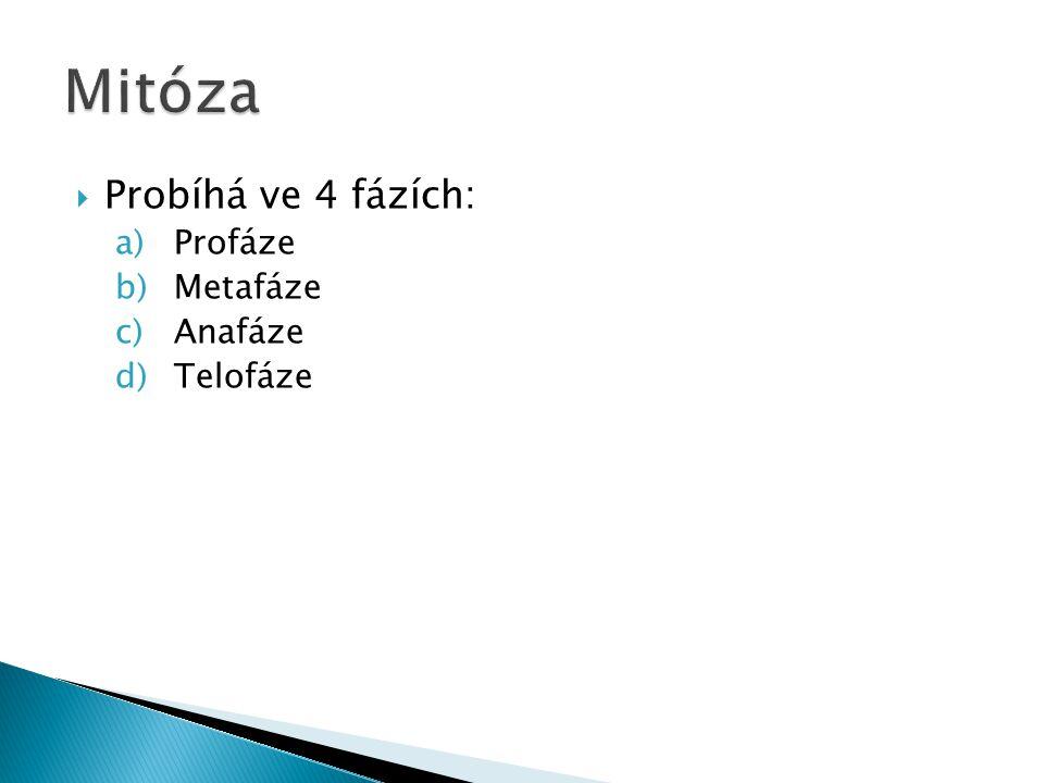  Probíhá ve 4 fázích: a)Profáze b)Metafáze c)Anafáze d)Telofáze