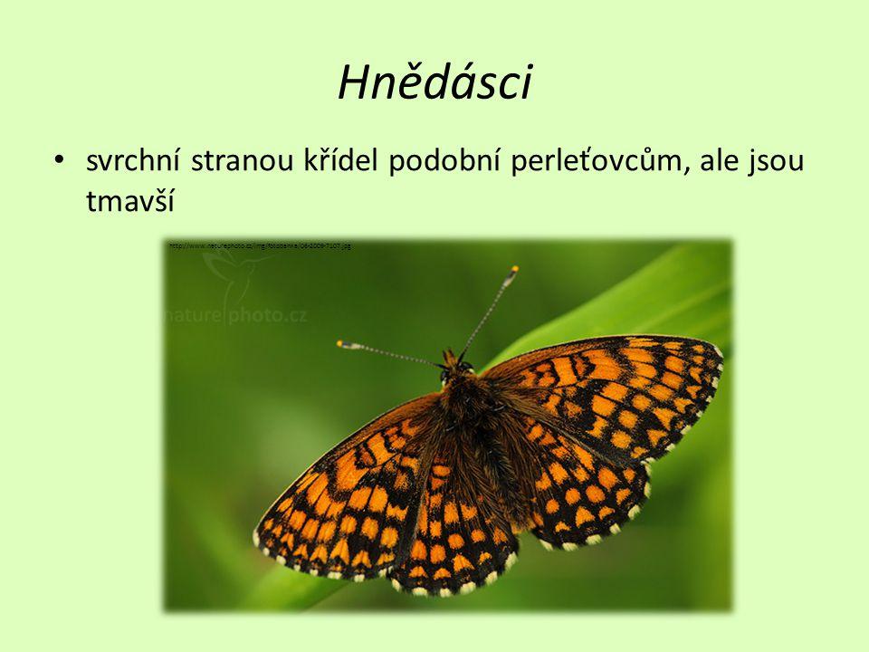 Hnědásci • svrchní stranou křídel podobní perleťovcům, ale jsou tmavší http://www.naturephoto.cz/img/fotobanka/06-2009-7107.jpg