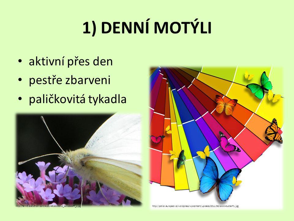 1) DENNÍ MOTÝLI • aktivní přes den • pestře zbarveni • paličkovitá tykadla http://farm5.staticflickr.com/4120/4916220012_cc01d3dbf7_z.jpghttp://potisk.europack.cz/wordpress/wp-content/uploads/2011/06/colors-butterfly.jpg