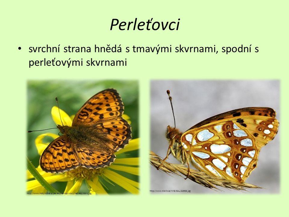 Perleťovci • svrchní strana hnědá s tmavými skvrnami, spodní s perleťovými skvrnami http://www.motylkove.cz/perletoveckoprivovy/nahledy/obr1.jpg http://www.biolib.cz/IMG/GAL/22933.jpg