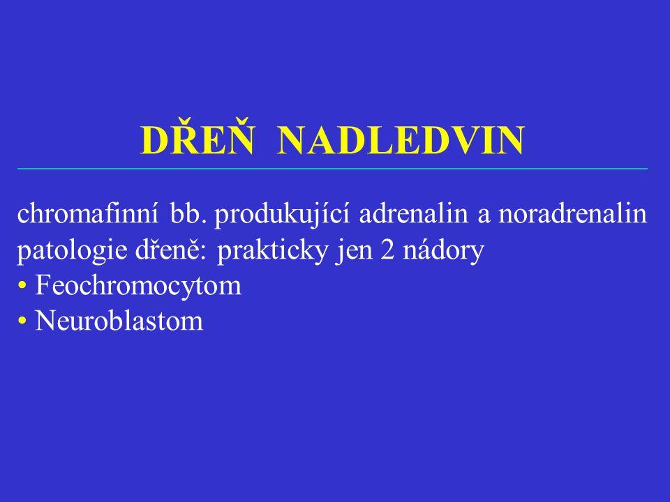 DŘEŇ NADLEDVIN chromafinní bb. produkující adrenalin a noradrenalin patologie dřeně: prakticky jen 2 nádory • Feochromocytom • Neuroblastom