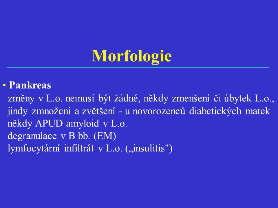 Morfologie • Pankreas změny v L.o.