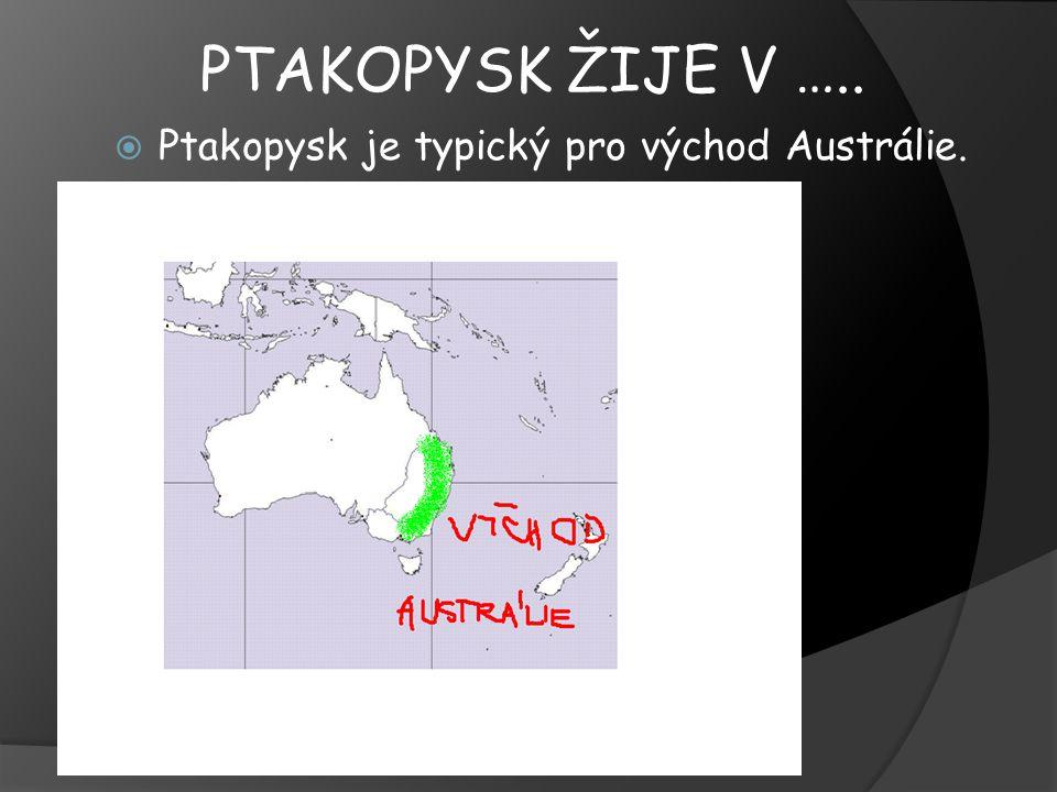 PTAKOPYSK ŽIJE V …..  Ptakopysk je typický pro východ Austrálie.