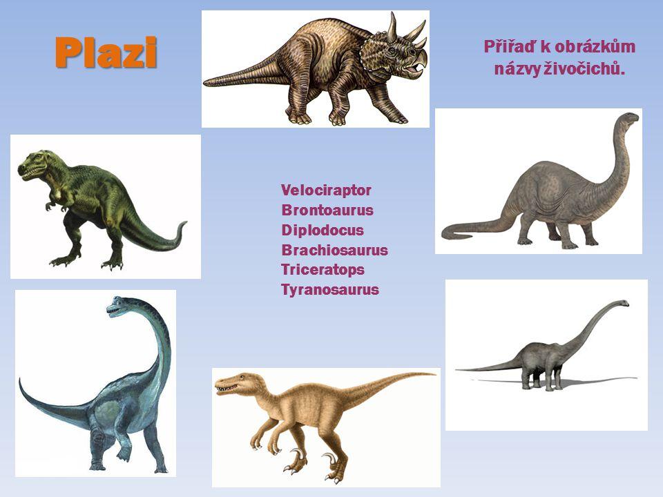 Velociraptor Brontoaurus Diplodocus Brachiosaurus Triceratops Tyranosaurus Plazi Přiřaď k obrázkům názvy živočichů.