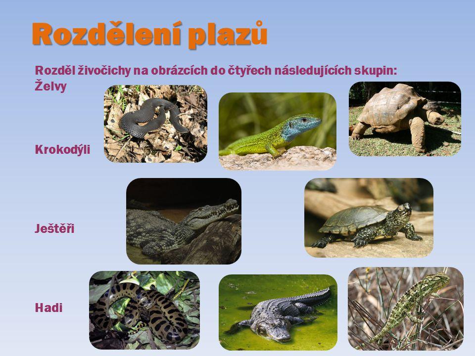 Rozdělení plaz Rozdělení plazů Rozděl živočichy na obrázcích do čtyřech následujících skupin: Želvy Krokodýli Ještěři Hadi