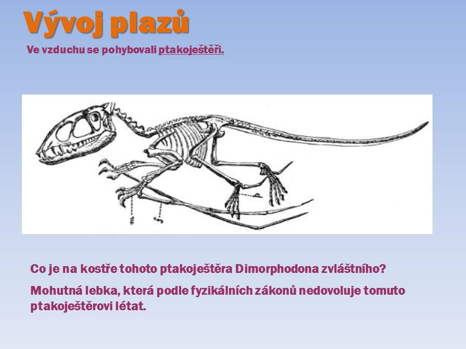 Vývoj plazů Ve vzduchu se pohybovali ptakoještěři. Co je na kostře tohoto ptakoještěra Dimorphodona zvláštního? Mohutná lebka, která podle fyzikálních