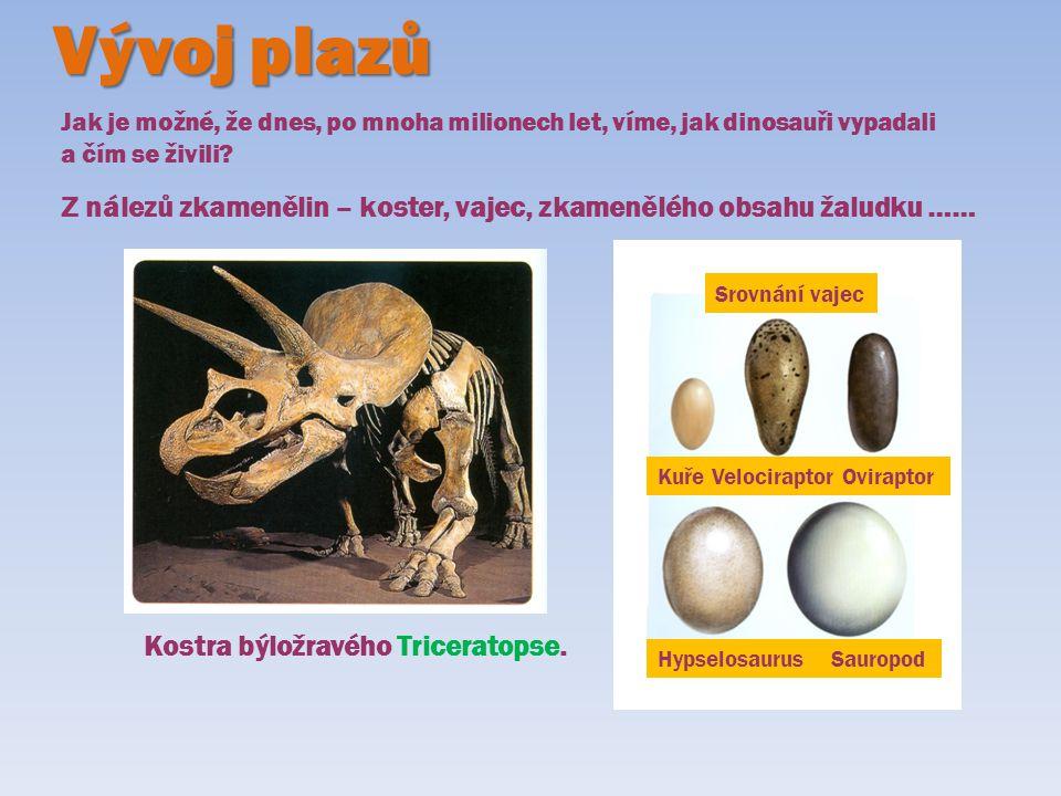 Vývoj plazů Jak je možné, že dnes, po mnoha milionech let, víme, jak dinosauři vypadali a čím se živili? Z nálezů zkamenělin – koster, vajec, zkameněl