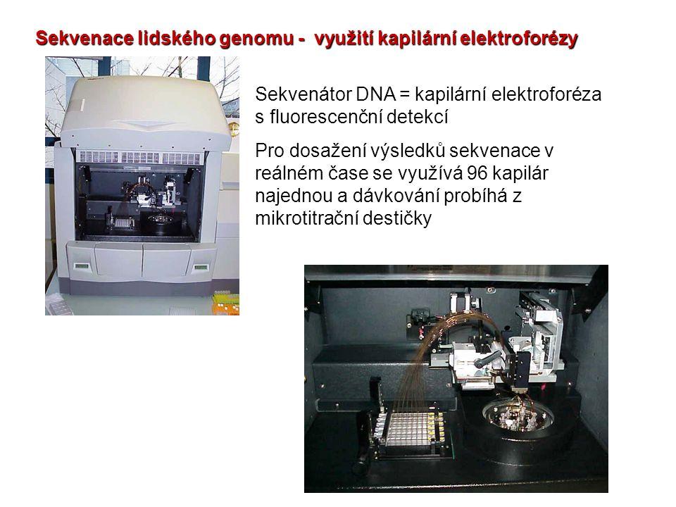 Sekvenace lidského genomu - využití kapilární elektroforézy Sekvenátor DNA = kapilární elektroforéza s fluorescenční detekcí Pro dosažení výsledků sek