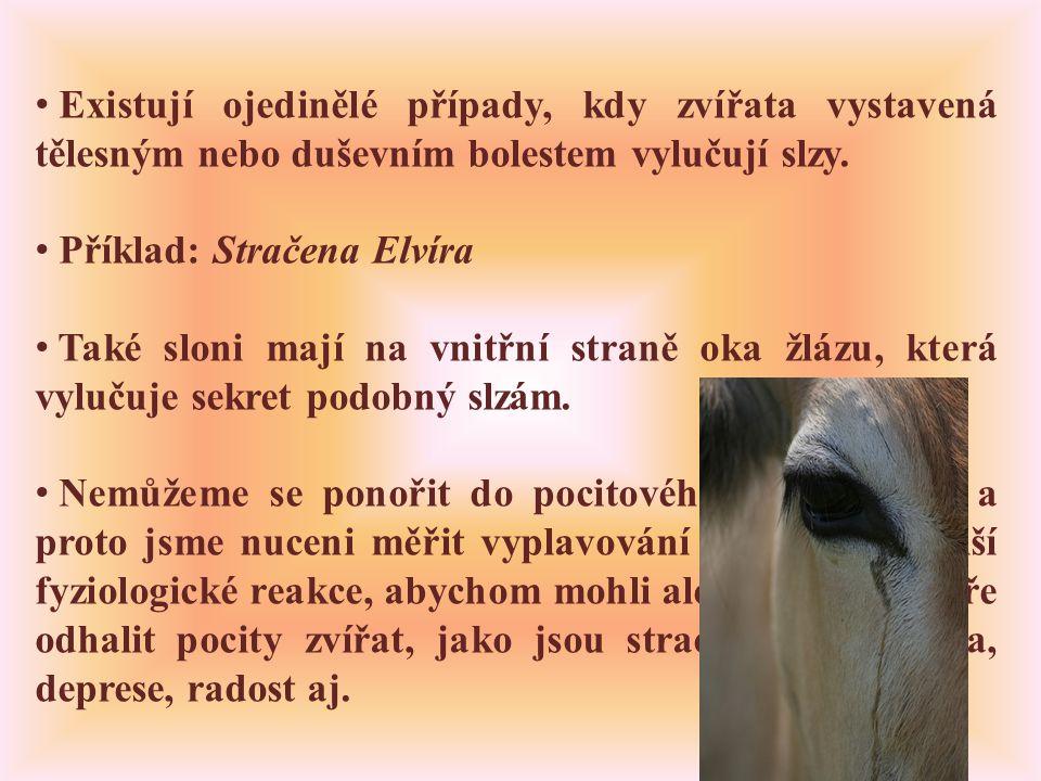 • Existují ojedinělé případy, kdy zvířata vystavená tělesným nebo duševním bolestem vylučují slzy.