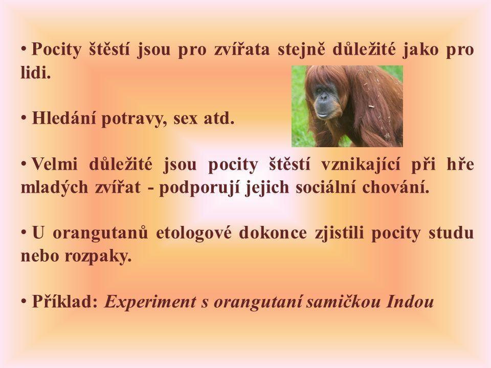 • Pocity štěstí jsou pro zvířata stejně důležité jako pro lidi.