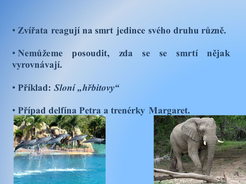 • Zvířata reagují na smrt jedince svého druhu různě.