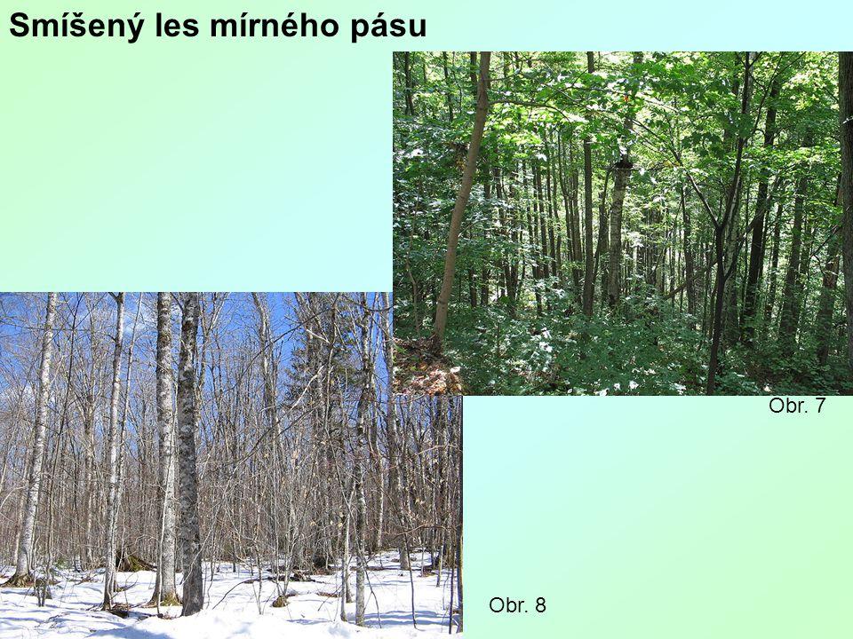 Smíšený les mírného pásu Obr. 8 Obr. 7