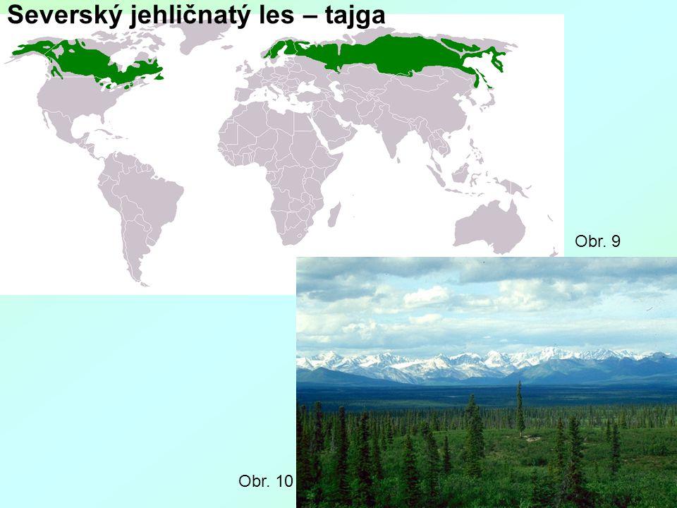 Severský jehličnatý les – tajga Obr. 10 Obr. 9