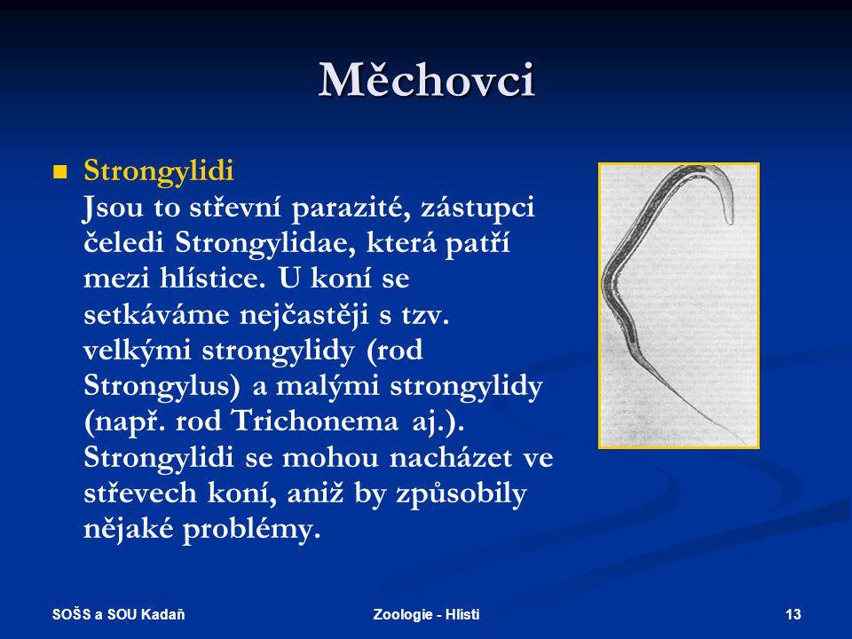 SOŠS a SOU Kadaň 13Zoologie - Hlísti Měchovci   Strongylidi Jsou to střevní parazité, zástupci čeledi Strongylidae, která patří mezi hlístice. U kon