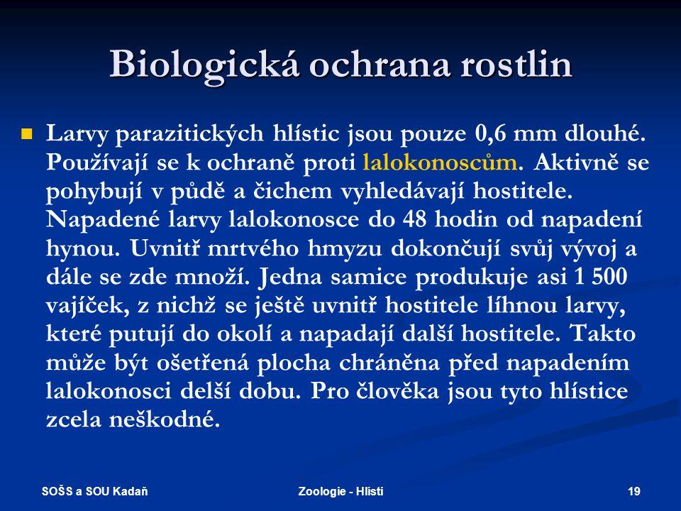 SOŠS a SOU Kadaň 19Zoologie - Hlísti Biologická ochrana rostlin   Larvy parazitických hlístic jsou pouze 0,6 mm dlouhé. Používají se k ochraně proti