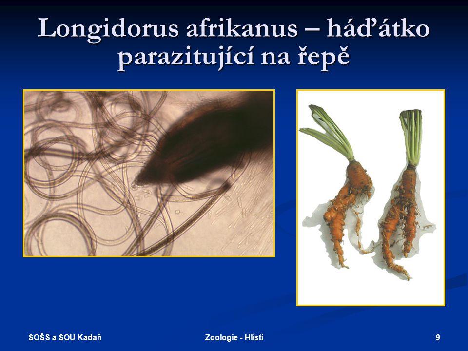 SOŠS a SOU Kadaň 9Zoologie - Hlísti Longidorus afrikanus – háďátko parazitující na řepě