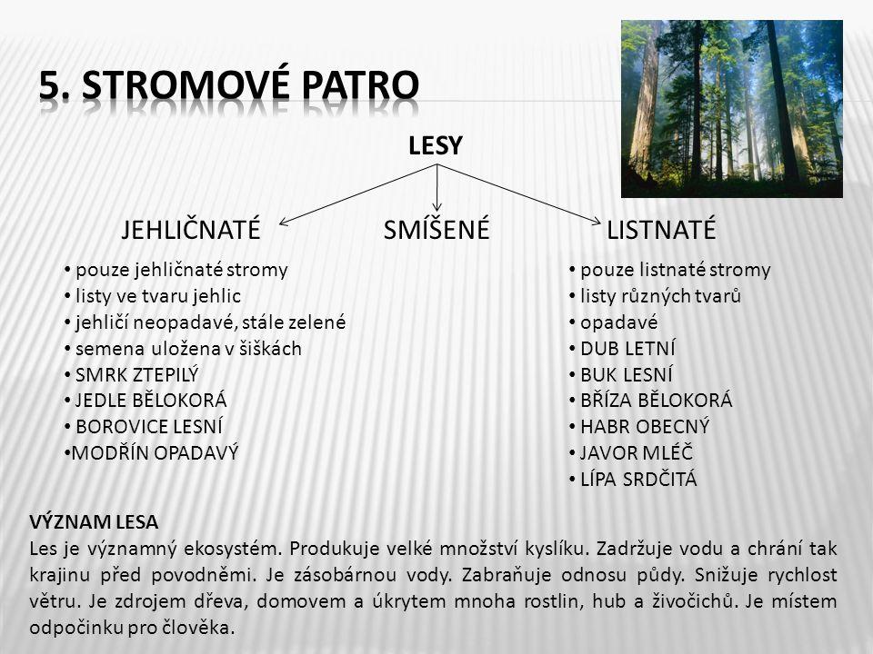LESY JEHLIČNATÉ SMÍŠENÉ LISTNATÉ • pouze jehličnaté stromy • listy ve tvaru jehlic • jehličí neopadavé, stále zelené • semena uložena v šiškách • SMRK