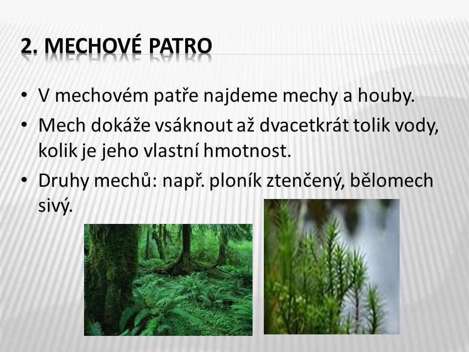 • V mechovém patře najdeme mechy a houby. • Mech dokáže vsáknout až dvacetkrát tolik vody, kolik je jeho vlastní hmotnost. • Druhy mechů: např. ploník