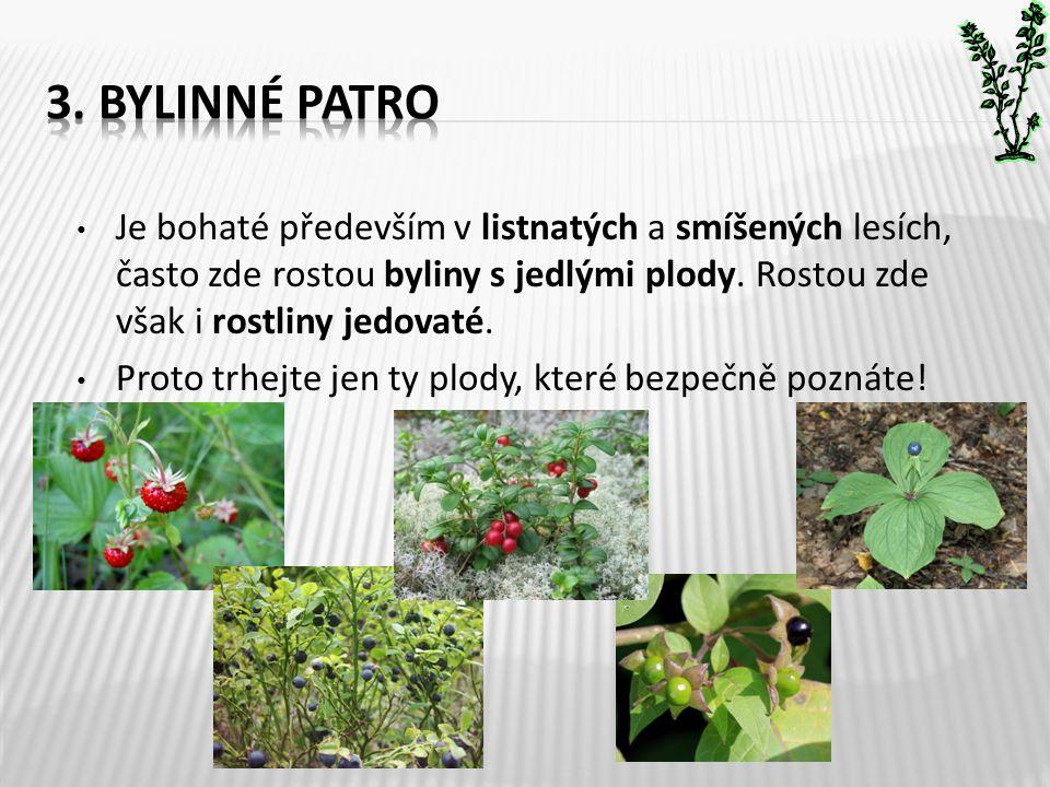 • Je bohaté především v listnatých a smíšených lesích, často zde rostou byliny s jedlými plody. Rostou zde však i rostliny jedovaté. • Proto trhejte j