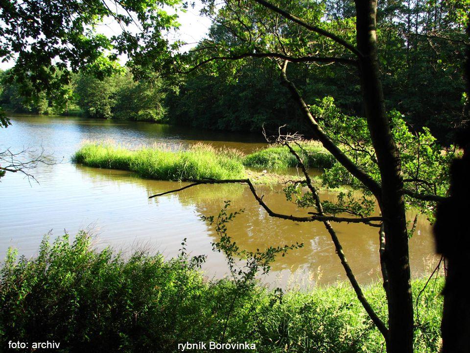 rybník Borovinka foto: archiv