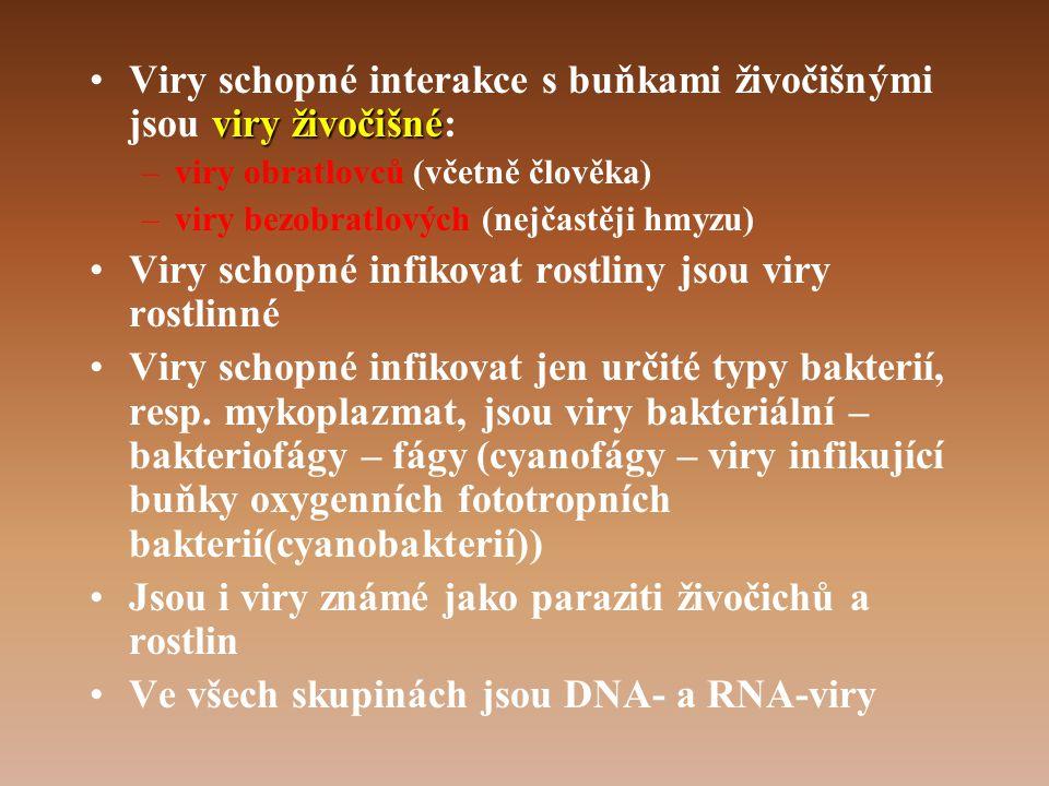 viry živočišné •Viry schopné interakce s buňkami živočišnými jsou viry živočišné: –viry obratlovců (včetně člověka) –viry bezobratlových (nejčastěji hmyzu) •Viry schopné infikovat rostliny jsou viry rostlinné •Viry schopné infikovat jen určité typy bakterií, resp.