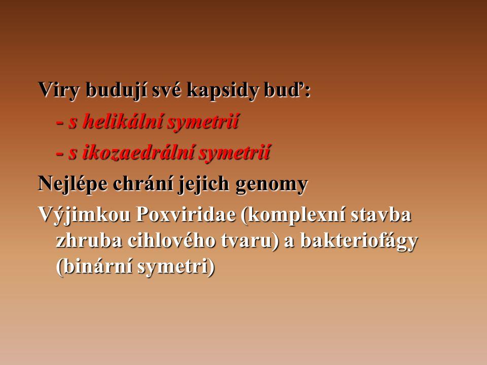 Viry budují své kapsidy buď: - s helikální symetrií - s ikozaedrální symetrií Nejlépe chrání jejich genomy Výjimkou Poxviridae (komplexní stavba zhruba cihlového tvaru) a bakteriofágy (binární symetri)