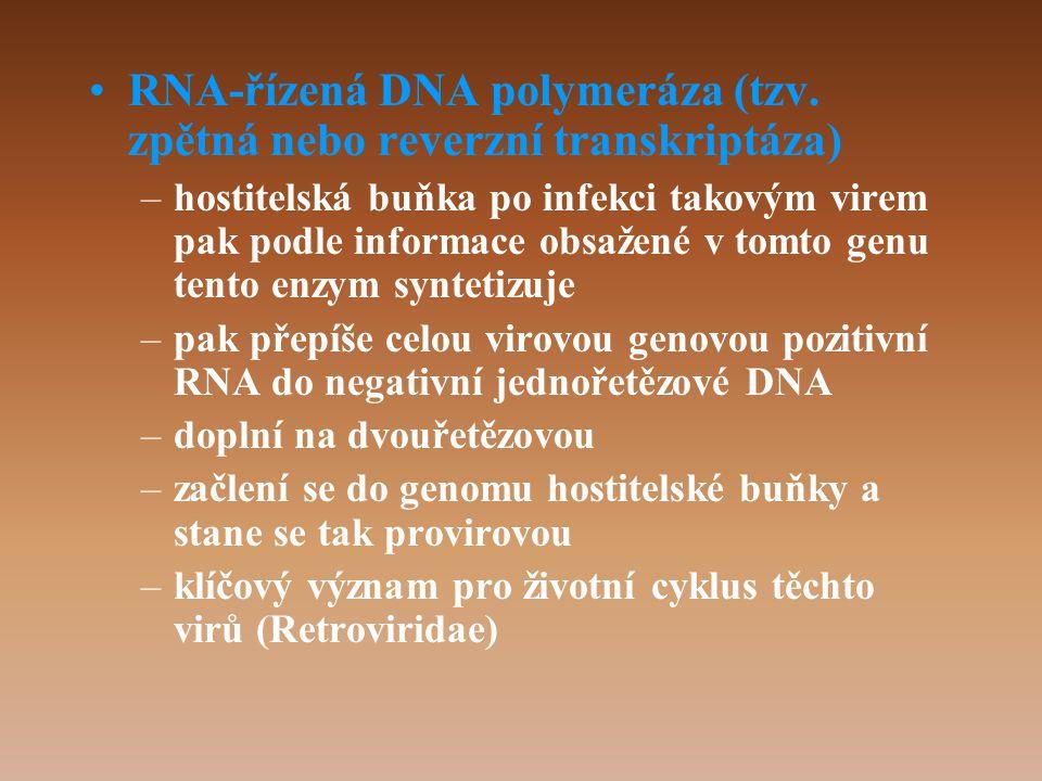 •RNA-řízená DNA polymeráza (tzv.