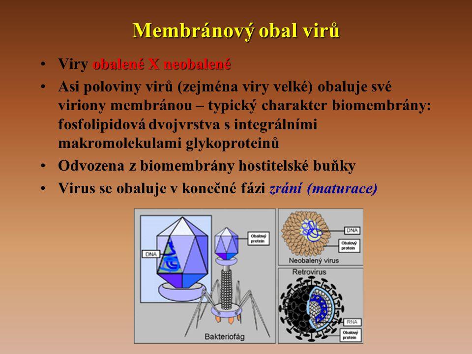 Membránový obal virů obalené X neobalené •Viry obalené X neobalené •Asi poloviny virů (zejména viry velké) obaluje své viriony membránou – typický charakter biomembrány: fosfolipidová dvojvrstva s integrálními makromolekulami glykoproteinů •Odvozena z biomembrány hostitelské buňky •Virus se obaluje v konečné fázi zrání (maturace)
