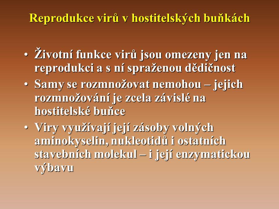 Reprodukce virů v hostitelských buňkách •Životní funkce virů jsou omezeny jen na reprodukci a s ní spraženou dědičnost •Samy se rozmnožovat nemohou – jejich rozmnožování je zcela závislé na hostitelské buňce •Viry využívají její zásoby volných aminokyselin, nukleotidů i ostatních stavebních molekul – i její enzymatickou výbavu